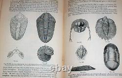 1893 Geology FOSSILS Dinosaur Extinct Trilobite Paleontology Tooth CT Civil War